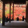 南禅寺の紅葉いま見ごろ