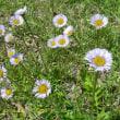 フデリンドウ・アズマギクなどの花が咲いています・・・