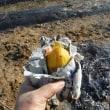 焼き芋しながら山芋掘り?