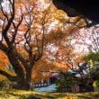 秋色鎌倉2017【総集編】鎌倉の紅葉を巡る