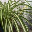植物の生命力と癒し…
