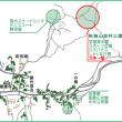 和歌山県の移動運用