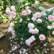 五月の薔薇