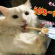 恋の手ほどき/猫マンガ『お泊まり会が中止になった理由』お知らせ