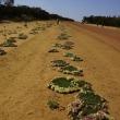 オーストラリア周遊とワイルドフラワー観察の旅②