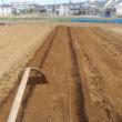 ニンジン トウモロコシ 枝豆 ヤマノイモ畝にマルチを張りました