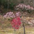 春を感じる写真ー4