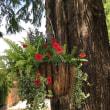昭和記念公園…メタセコイアと花