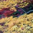 黄葉と紅葉~浄瑠璃寺