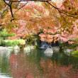姫路城周辺の秋 紅葉の季節