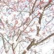 桜の花と香り ・ 子どもを守る易占い2016年4月分