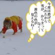 僕んちも雪が積もったんだ!別府マラソンで山中教授走ったんだ!