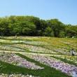 横浜里山ガーデンの花風景
