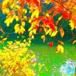明日は、癒やしの村の感謝祭