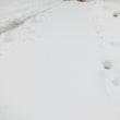 2018/03/21  17:00 積雪状況 / 山梨県 北杜市 小淵沢(900m付近)