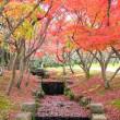 すっかり色づいた楡の池