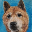 知人の愛犬