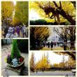 神宮外苑のイチョウ並木などを巡る散歩  [退職者の会:日帰り散歩]