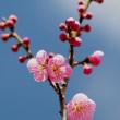 仙台も梅開花 まもなく桜・・・