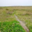 まだ枯野の石狩浜