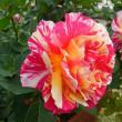 廻るもの 初夏の花たち3