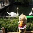 [六角堂」の池に生まれた白鳥のヒナ。その愛らしさは注目の的