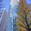 2017.12.18 西新宿 コクーンタワー: 秋残照の初冬風景