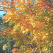 10月19日(木)、気温が下がってきましたねのfika.