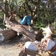 志摩スペイン村 「童話の森」
