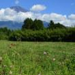 大石公園と野鳥の森公園からの富士山
