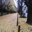 今朝の神宮外苑イチョウ並木・・・ぬれ落ち葉