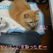 ネコ・リンちゃんの薬アレルギー