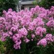 いまどきの花