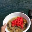 第28回 舞鶴魚まつり