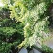 雨上がりの長沢川の表情は