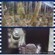 伏見稲荷大社と石峰寺を訪ねて