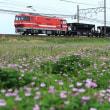2017-04-22_私鉄の新鋭機関車。