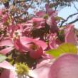 春の風に舞う