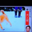 1/21 夏井先生 お題 雪と犬