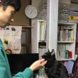 看板猫 黒猫ジジィとピアノレッスン 見守り編