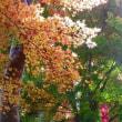 本年最後の紅葉--広幡八幡宮から観音寺へ