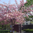 4月上旬の肌寒い土曜日‥てんしば界隈を歩いて見ました (大阪市)