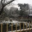 舞う雪は美しい♪