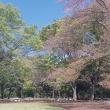 4月21日(日)・光が丘公園ツリーイング体験会