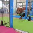 """子犬を迎えたら""""幼稚園""""に行こう♪  犬のしつけ教室@アロハドギー"""