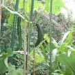 あやめ祭り&SL&我が家の庭では…(^_^.)
