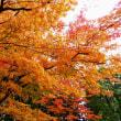 函館見晴公園・紅葉