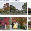 紅葉する東山公園の森