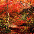 愛し紅葉景色