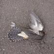 県鳥も骸となればゴミ扱い…(>_<)